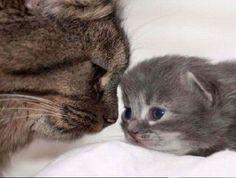 Animal Dads | Animal moms and dads