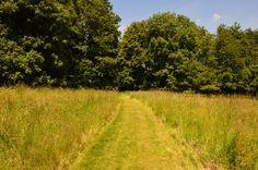 #nature #arbre #paysage #prairie