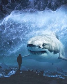 Giant Animals And Tiny Humans Impressive Photos Manipulations Surreal Art We bring to you On Magazine Website a beautiful and Impressive Giant Animals, Big Animals, Animals And Pets, Shark Pictures, Shark Photos, Surreal Photos, Surreal Art, Ocean Creatures, Mythical Creatures