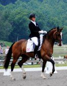 Markel Young Horse National Finalist! Imported 2008 Dutch gelding by Trento B