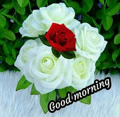 Happy Good Morning Images, Beautiful Morning Messages, Good Morning Funny, Good Morning Messages, Morning Quotes, Good Morning Flowers Rose, Good Morning Flowers Pictures, Flower Pictures, Beautiful Love Pictures