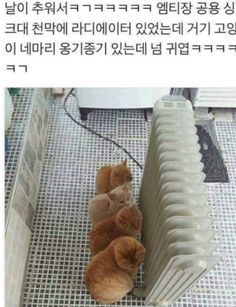 트위터글/여러가지글/웃긴글 : 네이버 블로그 Wild Animals Pictures, Animal Pictures, Funny Pictures, Cute Funny Animals, Funny Cute, Cute Cats, Dog Films, Animals And Pets, Cats And Kittens