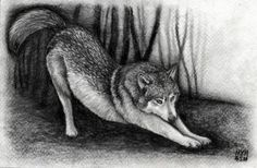 a tutorial i just found on how to draw a realistic wolf. i have been really in to drawing wolfs lately and i want to get as good at it as possible