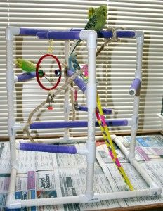 pvc pipe bird playgym/ stand