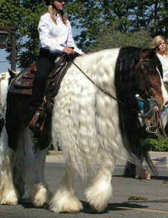 ♥ Horses ♥