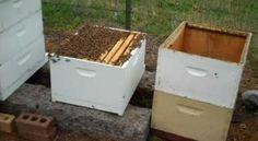 Beginner bee keeping