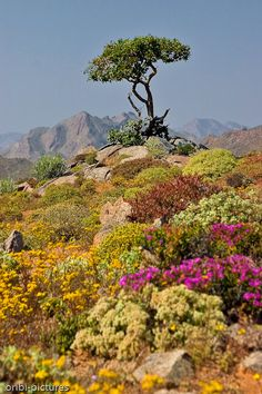 Richtersveld in spring - Northern Cape, South Africa Composition Photo, Beautiful World, Beautiful Places, South Afrika, Out Of Africa, Parcs, Beautiful Landscapes, Landscape Photography, Travel Photography