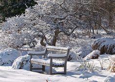Kuvahaun tulos haulle winter garden