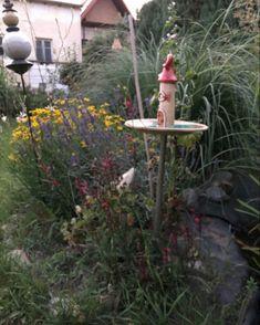 Bird, Instagram, Outdoor Decor, Home Decor, Beautiful Images, Nice Asses, Decoration Home, Room Decor, Birds