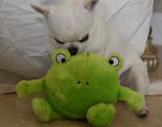 We've received so much positive feedback about the ZippyPaws frog dog toy in the March PawPals Box. Learn more about PawPals With Annie! at Pawpalswithannie.com. #dogs #subscriptionbox #puppies