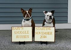Baby announcement with dog.