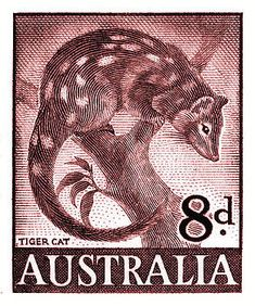 Vintage and beautifully engraved postage stamp issued in 1959 by Australia in a series commemorating native fauna, here depicted is the tiger quoll also known as (erroneously) the tiger cat which is endemic to Australia. Rare Stamps, Vintage Stamps, Reptiles, Australian Animals, Stamp Collecting, Art Pages, Retro, Vintage Posters, Fine Art America