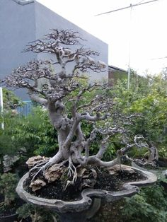 Bonsai Styles, Flowering Trees, Live Plants, Gardening, Flowers, Photography, Beautiful, Ideas, Garten
