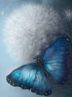 Butterfly on Dandelion, gif ✿⊱╮