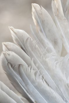 Her wings were dirty, but not quite as gruesome as the thoughts that littered her head.