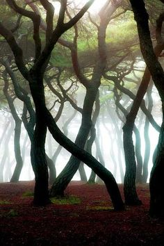 20 Amazing Pictures of Nature's Creativity - Trees | Picture Store