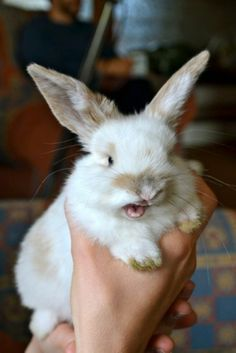 Hand Over All Your Carrots!