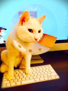 cat 宇宙飛行士2