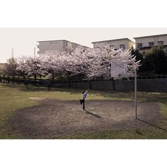 【somutam】さんのInstagramをピンしています。 《#tokyo #東京 #多摩センター #sakura #桜 #日本 #Japan #ประเทศญี่ปุ่น  #เดินเล่น #เที่ยว #ประจำวัน #snap #スナップ #旅 #Travel #street_photo #street_photographer #日常  #散歩写真 #repost #review》