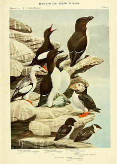N.H. - Birds of New York