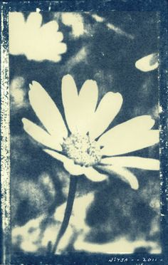 Cyanotype sun printing from paper negative. | More than Photography