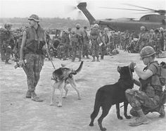 old war dog picture