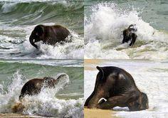 Water!! #elephant #viqua