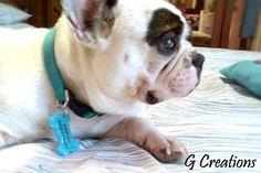 Blue Sprinkles Bone Dog Name Tag ID  Cute by GabriellesCreations