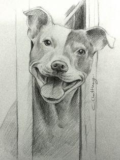 pitbull drawing by Chattravadee