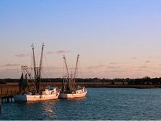 Reducing Bycatch in Shrimp Trawlers: Could Efforts in North Carolina Provide a Solution? - The Fish Site Local Seafood, Supply Chain, North Carolina, Exploring, Effort, Shrimp, Fish, Trends, Explore
