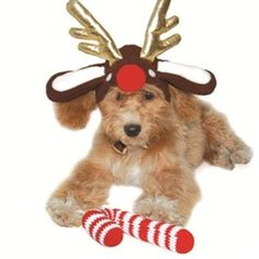 REINDEER HAT #dogs #puppy #doghat @poshpuppyboutique