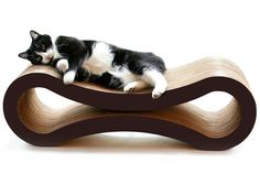 11 Brilliant Gifts for the Cat Lover in Your Life | Mental Floss