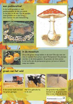 Wat doen de planten in de herfst?2 @keireeen Kids Gifts, School, Stuffed Mushrooms, Teaching, Autumn, Biology, Stuff Mushrooms, Schools, Teaching Manners