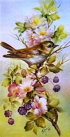 Early Morning Warbler