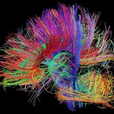 #Connectome #neuroscience