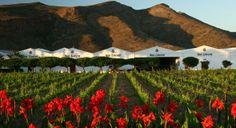 Van Loveren wine estate, Western Cape