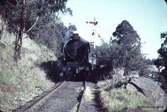 Railway cutting in Warburton.
