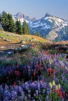 The Rocky Mountains stretch some 3,000 miles from British Columbia and Alberta in Canada through Idaho, Montana, Wyoming, Colorado, and down to New Mexico in the U.S. The range offers dramatic wilderness, diverse wildlife and alpine lakes. Mountain Lupine in the foreground.