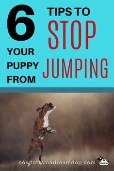 Is your puppy an attention-seeking maniac?! Are you frustrated by their jumping? When you pet your puppy and give them attention after jumping on you, they get rewarded for that behavior.  Train your puppy to have good manners from the start, so that when they are a full-grown adult they don't knock you to the ground with their jumping.  Use these six tips to stop your puppy from jumping on you and your guests. #puppy #dogtraining #pets #nojumping #dreamdog