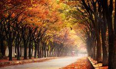 Walk in the Autumn by Jaewoon U - Photo 126907999 - 500px