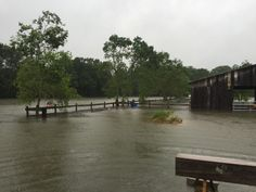 The Great Flood of 2016, Cypress Bayou Farm - www.thebayougypsy.com