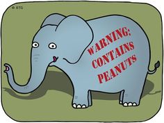 Attention, allergic zookeepers: Most elephants contain peanuts ... at least temporarily.