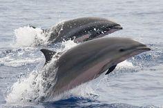 Dolphin Photos, Ocean Ecosystem, Bottlenose Dolphin, Wale, Sea World, Ocean Life, Marine Life, Sea Creatures, Under The Sea