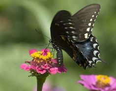 Butterfly Garden Planning & Design: learn how to design a garden that provides what butterflies need during each of the stages of a butterfly's life.