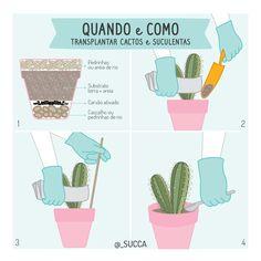 succa-post-23 Eco Garden, Backyard Garden Landscape, Dream Garden, Cactus Y Suculentas, Little Plants, Green Life, All Flowers, Outdoor Plants, Succulents Garden