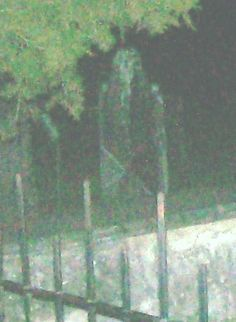 Taken in St. Augustine, FL, this photo from ghost-mysteries.com reportedly shows a cemetery apparition. The woman who submitted the pic claims she took several photos, but the apparition only appears in the image below. Is it indeed a ghost, or is it merely the outline of an old tombstone? View more apparitions photos here.