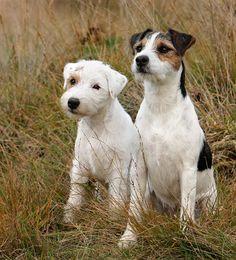 Chillis Blog | Aus dem Leben eines Parson Russell Terriers