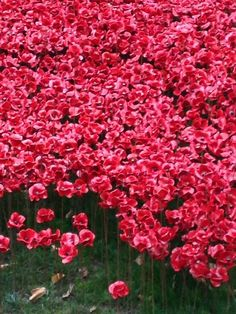 were magnificent - what a vision for Ceramic Poppies, Tower Of London, Veterans Day, Ceramic Artists, Installation Art, First World, War, Inspired, Twitter