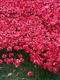 #Poppiesatthetower @tompiperdesign @PoppyLegion @thetowerlondon were magnificent - what a vision for #WW1Centenary