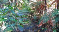 A Rejuvenating Morning in The Coromandel New Zealand, Plants, Tourism, Travel, Plant, Planting, Planets
